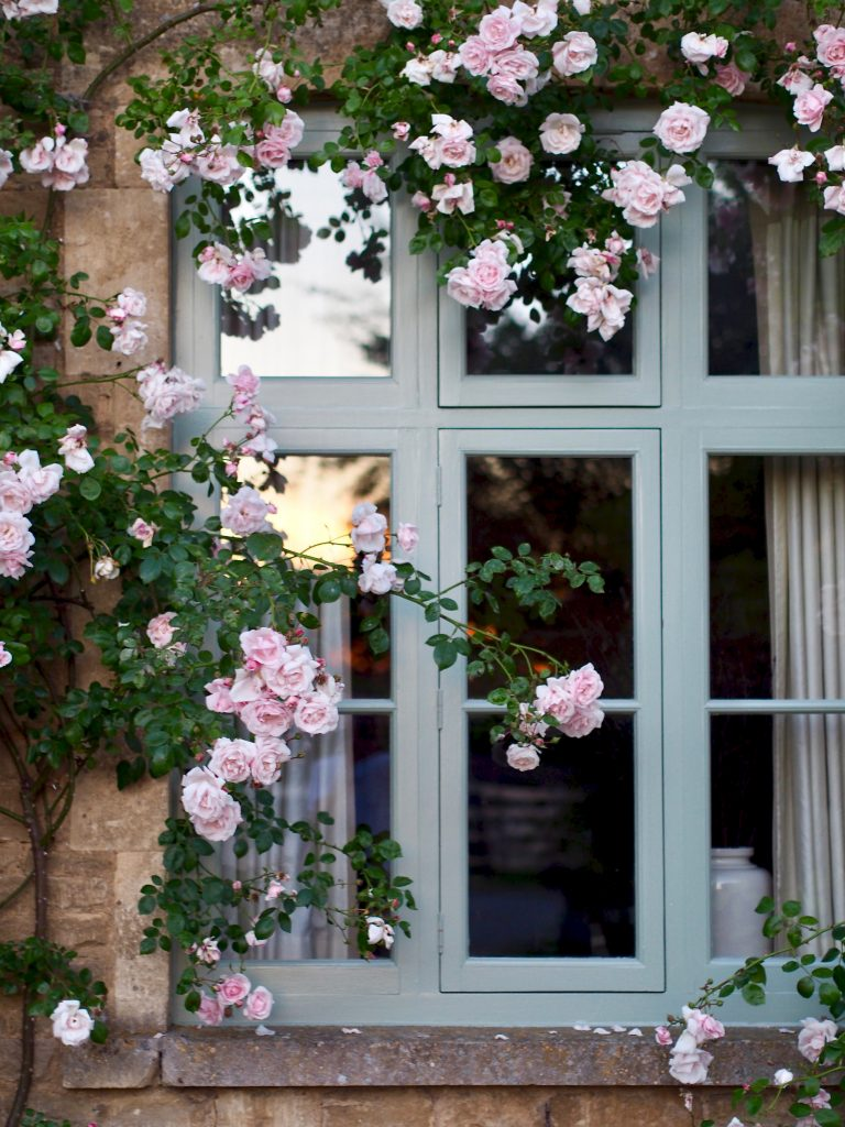 Climbing roses fresh in bloom surround the area homes at the Cotswolds