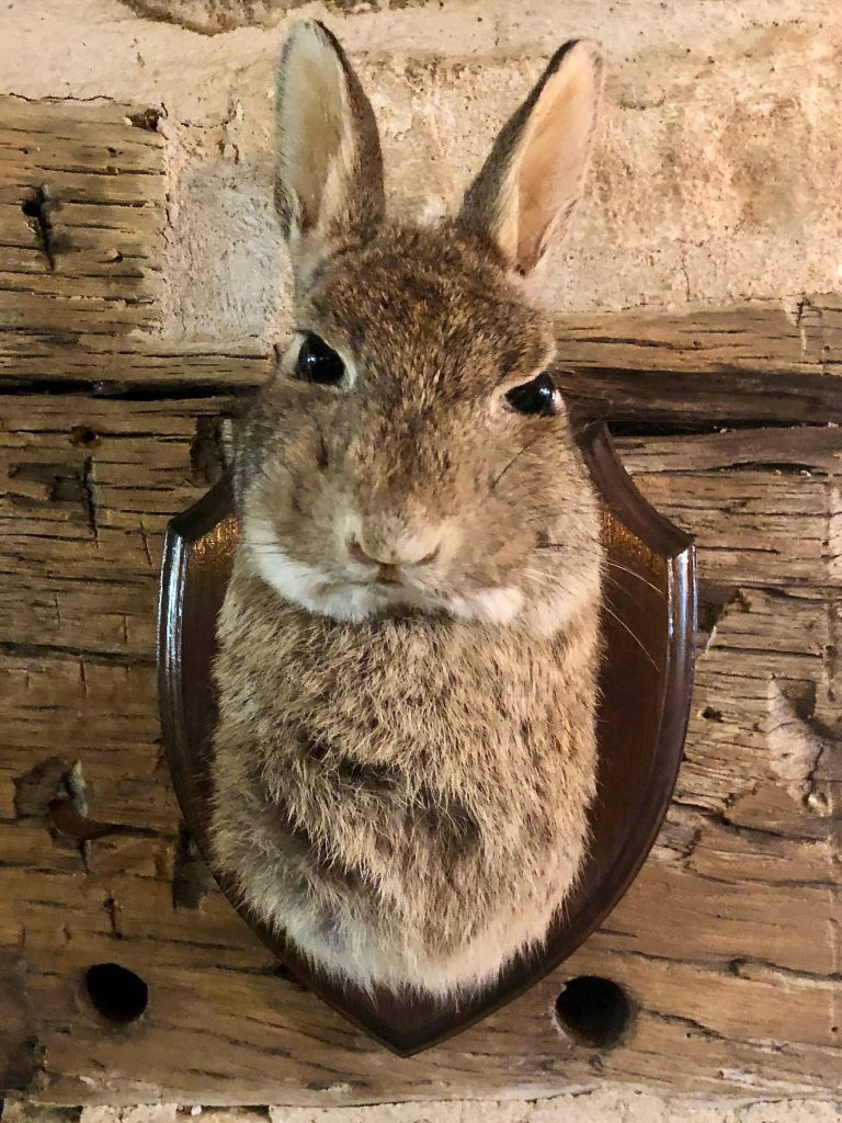 the Wild Rabbit cafe