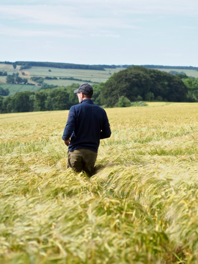 a walk in the fields on Cotswold Way National Park