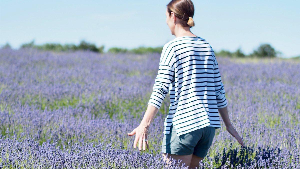 walking on a field of lavender
